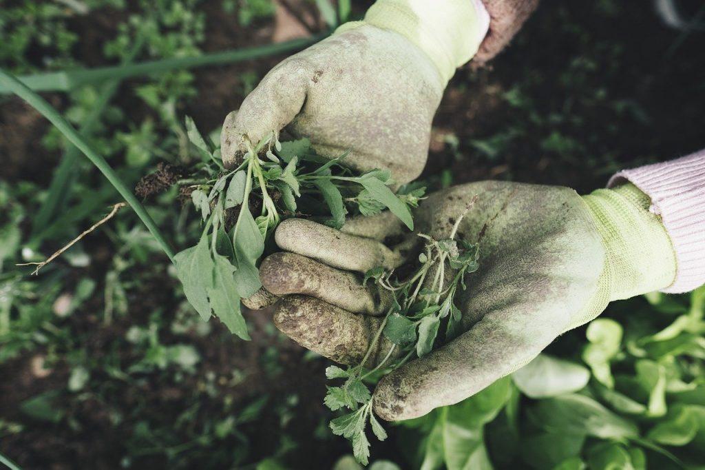 gardening, agriculture, grass